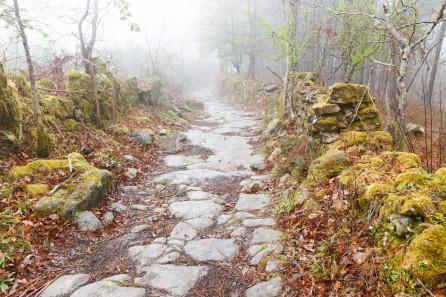 FW-Landschaften9