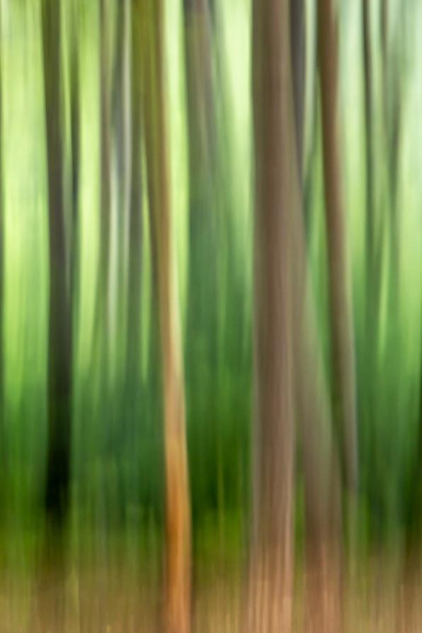 woodland sbstract_0001
